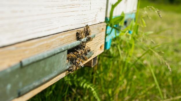 ミツバチが着陸ボードに飛んでハイブに入り、ミツバチがハイブに飛んでいきます。ミツバチが守る。養蜂場のじんましん。ミツバチは蜂蜜の準備ができています。春の季節