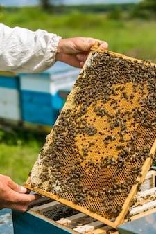 仕事で養蜂家。ハニカム上の蜂。蜂の巣箱のフレーム