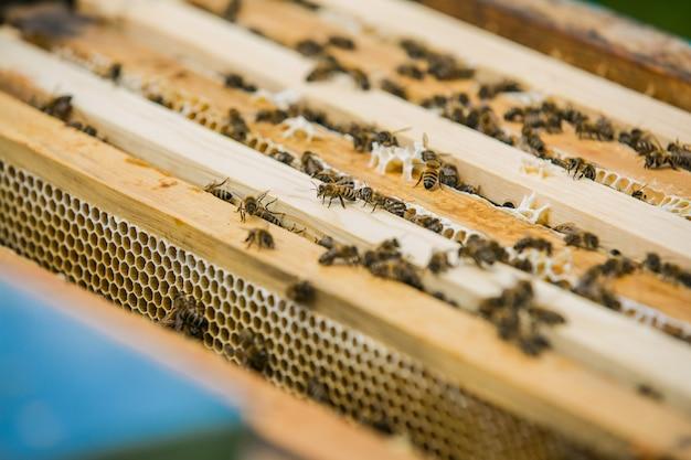 蜂蜜細胞の働き蜂のビューを閉じます。ハニカム上で働くミツバチ。ハニカム上の蜂。ミツバチの巣箱のフレーム