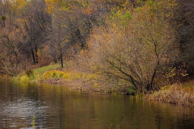 秋の森の川の美しい景色。