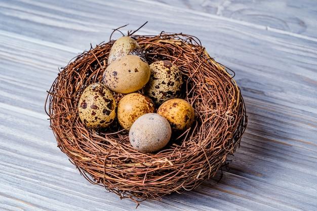 巣の中のウズラの卵。素朴な木製の巣に鳥の卵。