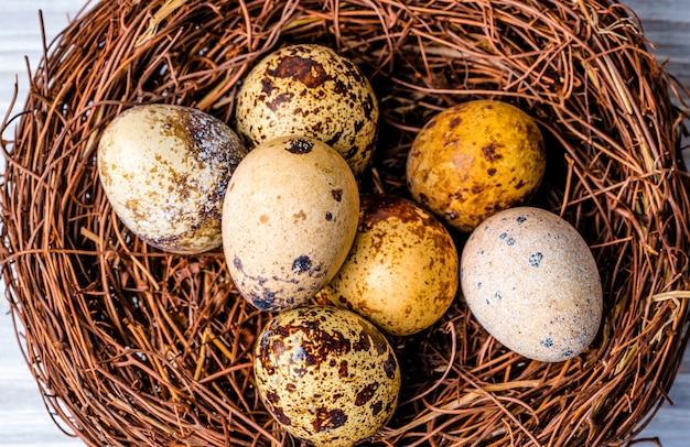 巣の中のウズラの卵。プロテインダイエット。健康的なダイエット。