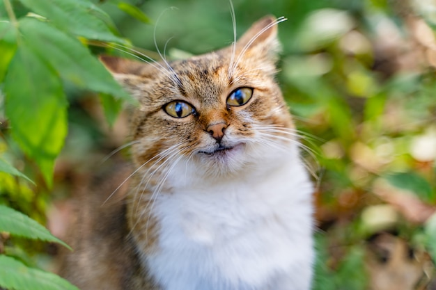 Весёлый котик в светлых тонах смотрит прямо в камеру летом в парке