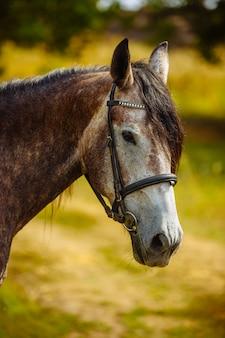 自然に馬のクローズアップの肖像画