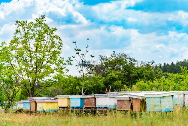養蜂場のミツバチの巣箱