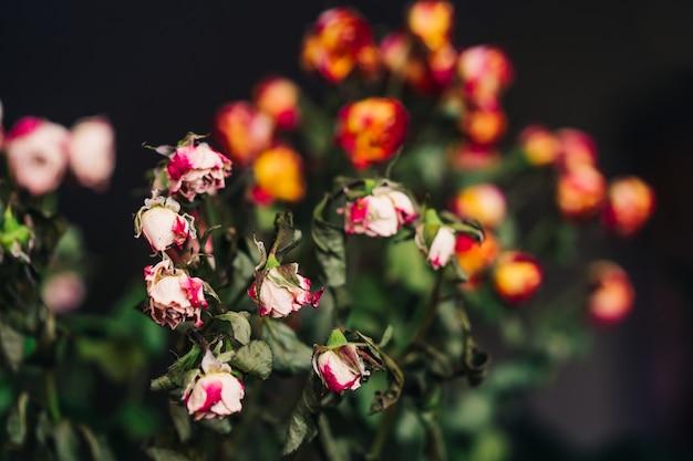 灰色の乾燥したピンクと黄色のバラの配置