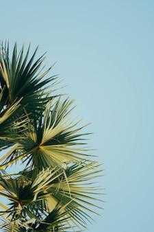 Пальма в небе