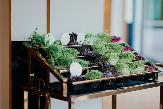 小さな鉢植えの植物