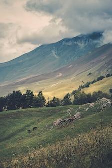 空の牧草地で放牧する馬