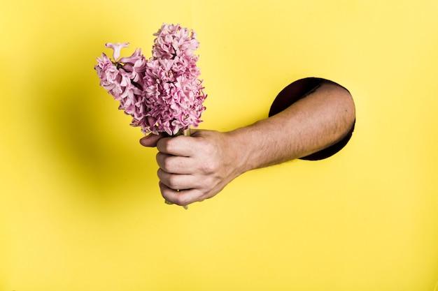 Рука от отверстия в бумажной стене держит цветок гиацинта на желтой предпосылке.
