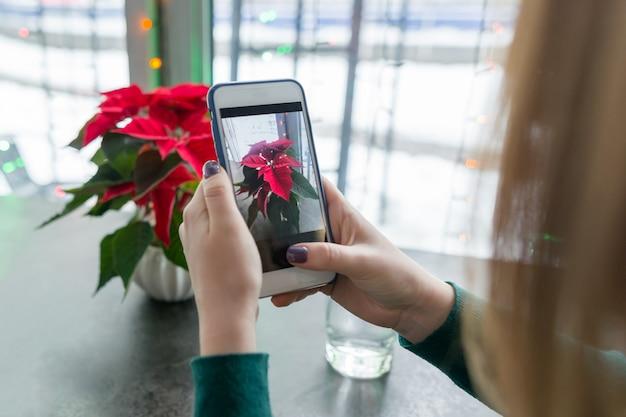 クリスマスシンボル赤ポインセチアクリスマス花