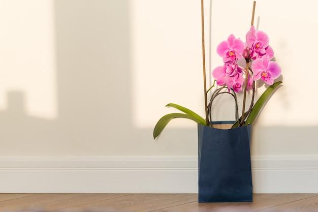 Розовая орхидея в помещении на полу