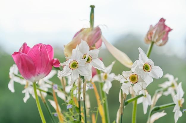 色あせた春の花、チューリップ、白い水仙の花束が乾いた