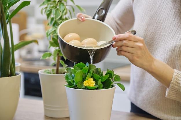 卵を沸騰させた後の天然肥料水、鍋に植物に水をまく女性