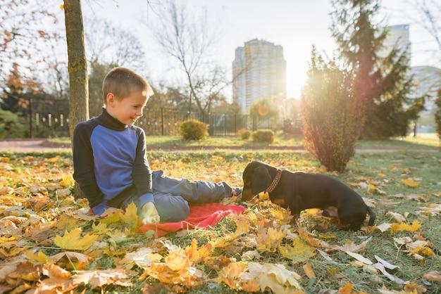 Мальчик играет с собакой таксы в осеннем солнечном парке