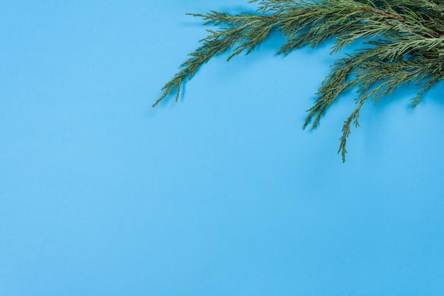 ジュニパーの枝の背景。青色の背景、コピースペース、トップビュー