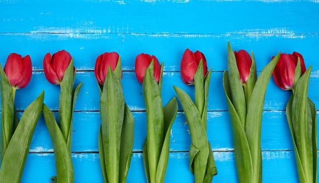Букет из красных цветущих тюльпанов с зелеными стеблями и листьями, цветами