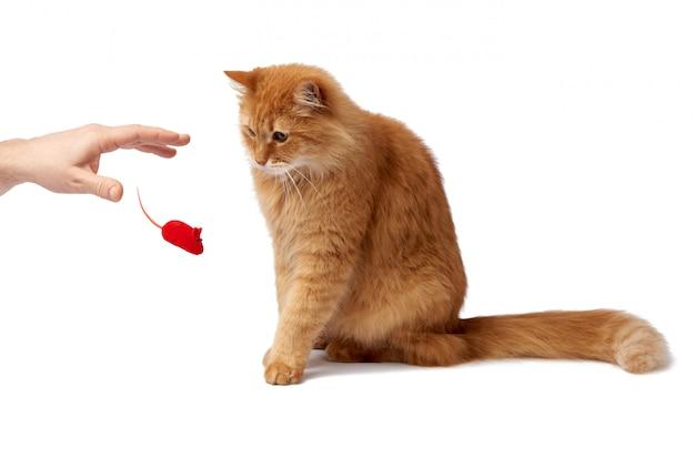 Взрослый пушистый рыжий кот сидит боком