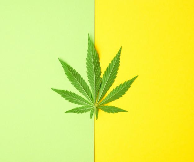 Зеленый лист конопли на желто-зеленом фоне