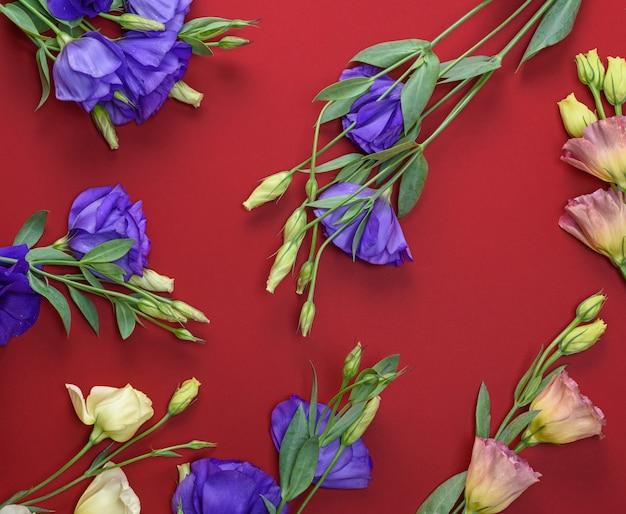 赤の背景に咲く花トルコギキョウ