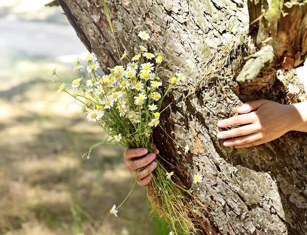 人間の手、晴れた日に白いヒナギクの花束