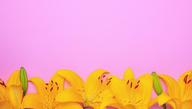 ユリの黄色い開花芽