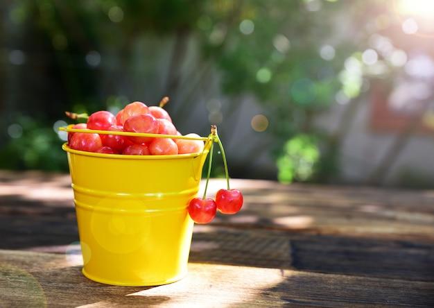 太陽の下で熟したピンクチェリー
