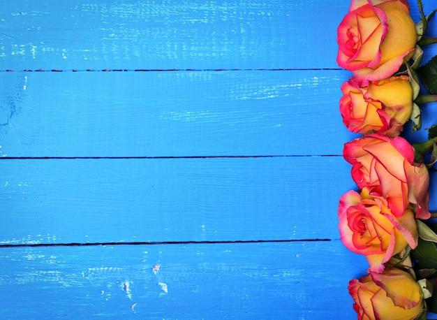 青い木製の背景に黄色いバラの開花