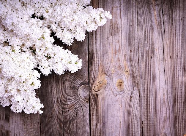 ライラック色の花の白い枝