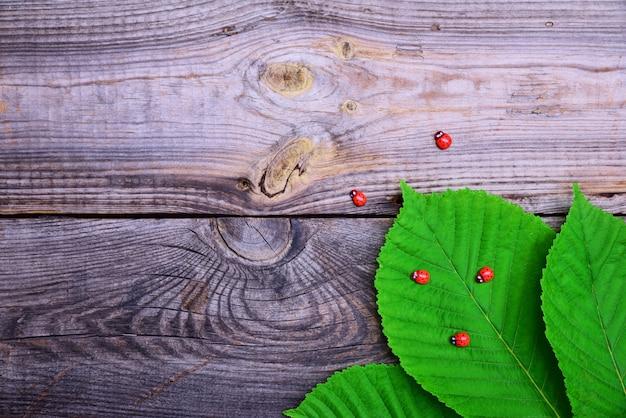 Зеленые листья каштана в углу на серой деревянной поверхности поверхности поверхности