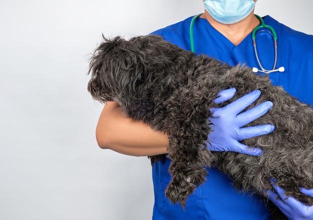 ふわふわの犬を保持している青い制服と滅菌ラテックス手袋の医者