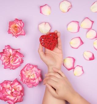 女性の手は赤いハート、ピンクのバラの花びらと紫色の背景を保持します。