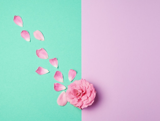 ピンクに咲くバラの芽と緑の紫色の背景に散りばめられた花びら