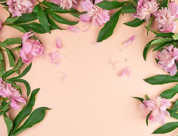 桃の背景に咲くピンクの牡丹の芽