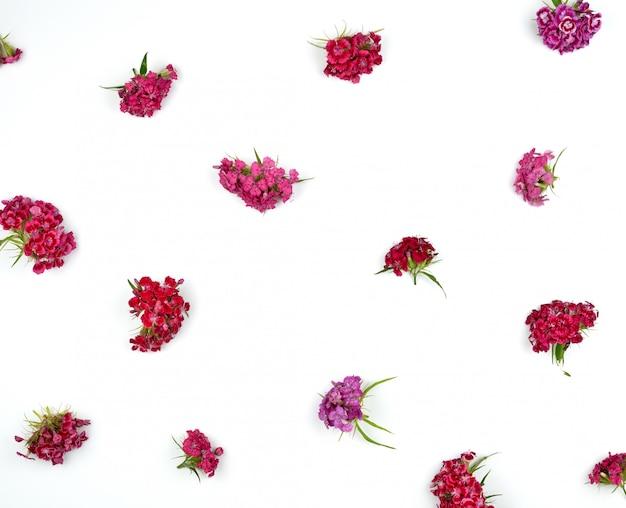 トルコのカーネーションが咲く芽ナデシコ