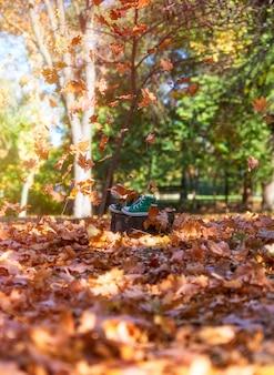 黄色のカエデの葉が飛んでいる途中で切り株に緑のスニーカーを着用