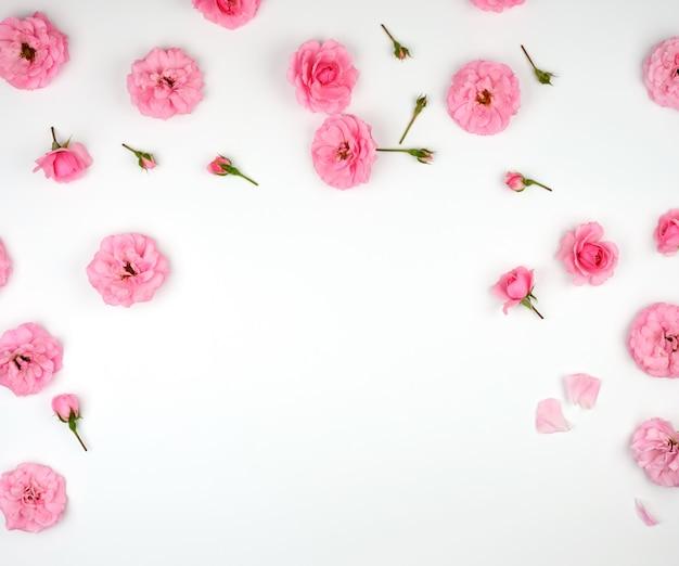 Цветущие бутоны розовых роз на белом