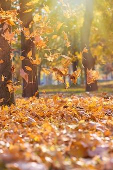 夕陽に照らされた秋の公園で空を飛んでいる乾燥した明るいオレンジと黄色の葉