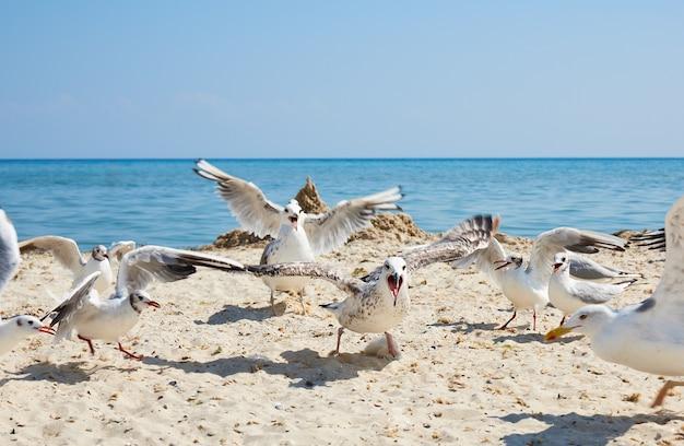 夏の晴れた日にビーチでカモメの群れ