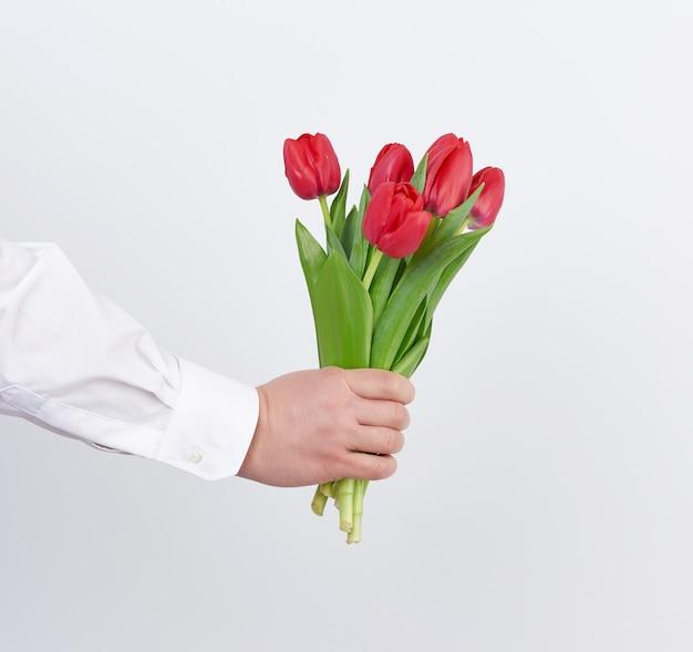 Мужская рука в белой рубашке держит букет красных цветущих тюльпанов