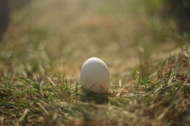 Белое яйцо стоит на сухой траве