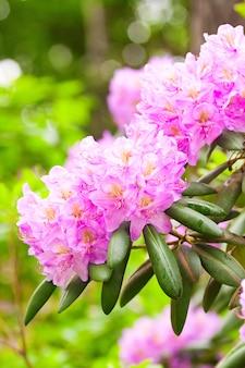 Нежные цветы на кустах