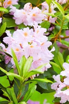 Хрупкие цветы на кустах