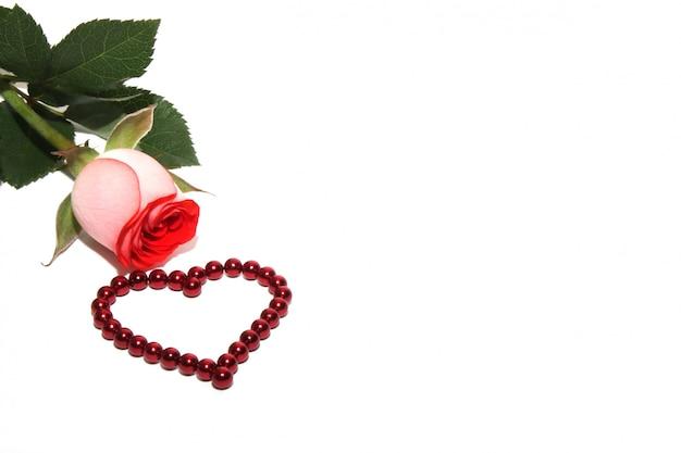 バラと赤い磁気ビーズで作られた心は白で隔離されます