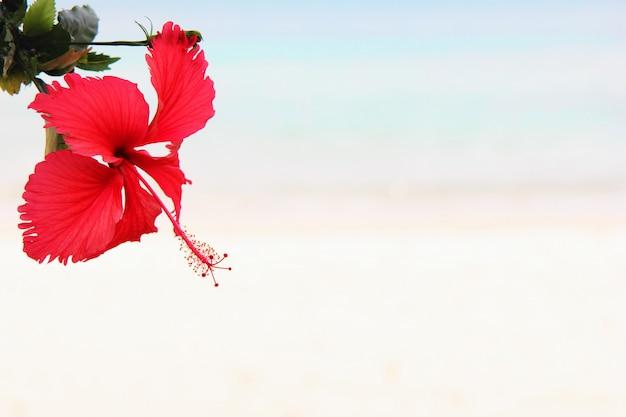赤いハイビスカスの花のクローズアップ