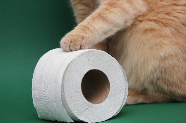 Лапа рыжего кота касается рулона белой туалетной бумаги.