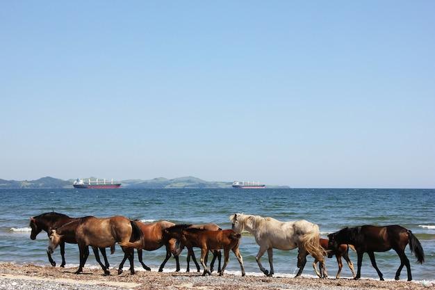 Лошади гуляют по побережью. морской пейзаж с животными.