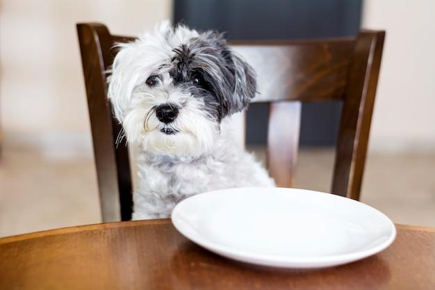 木製の椅子に座って犬