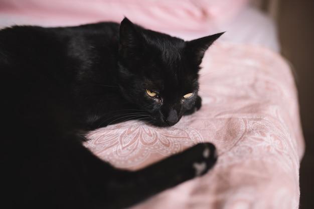 美しい黄色い目と強烈な視線の黒いふわふわした猫が寝室のベッドに横たわっています。ピンクのベッドの上の美しい黒い子猫の肖像画。コピースペース。国内およびペットのコンセプト。