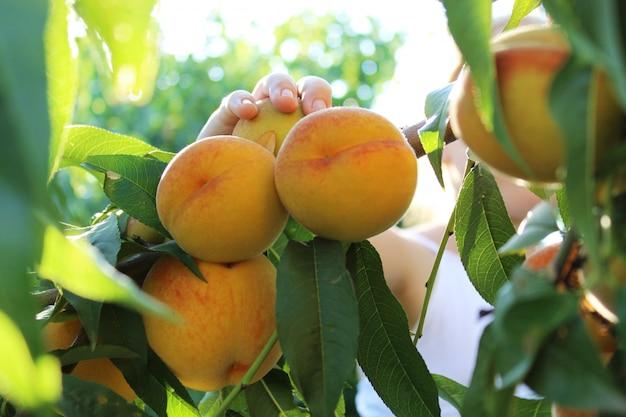 桃の木の近くの子